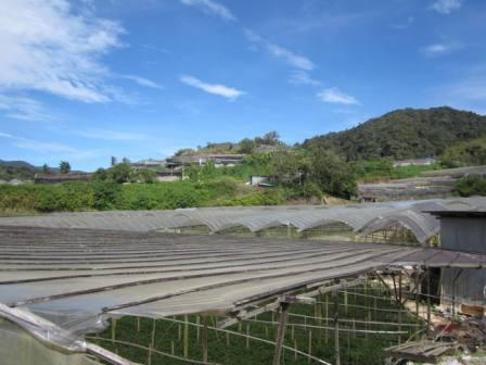 Tomato and green pepper farm in Cameron Highlands