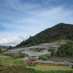 Beautiful hills and scenery in Cameron Highlands