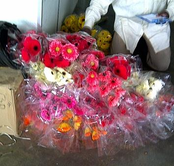 Flower Supplier from Cameron Highlands