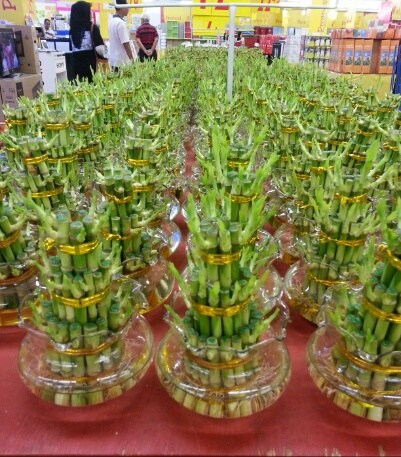 Chinese New Year lucky bamboo shoots sold in Malaysia ...