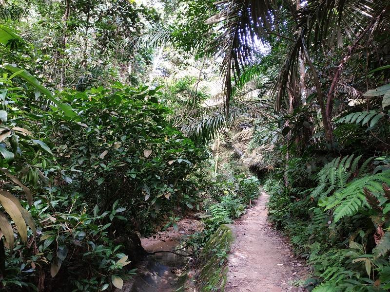 Bukit Gasing Hill Hutan Pendidikan